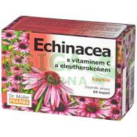 Echinacea kapsle s vit.C cps.60 (Dr.Müller)
