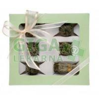 OXALIS Antigona zelená set kvetoucích čajů