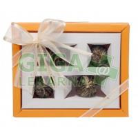 Oxalis Artemis oranžová set kvet. čajů