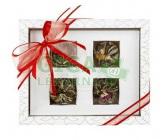 OXALIS Asteria bilá - set kvetoucích čajů