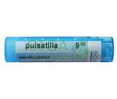 Obrázek Pulsatilla CH9 gra.4g